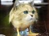 duckcat